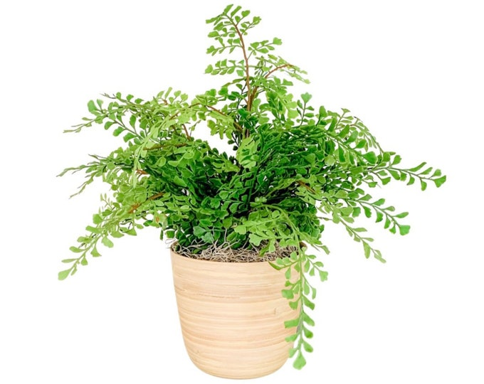 Faux Maidenhair Fern