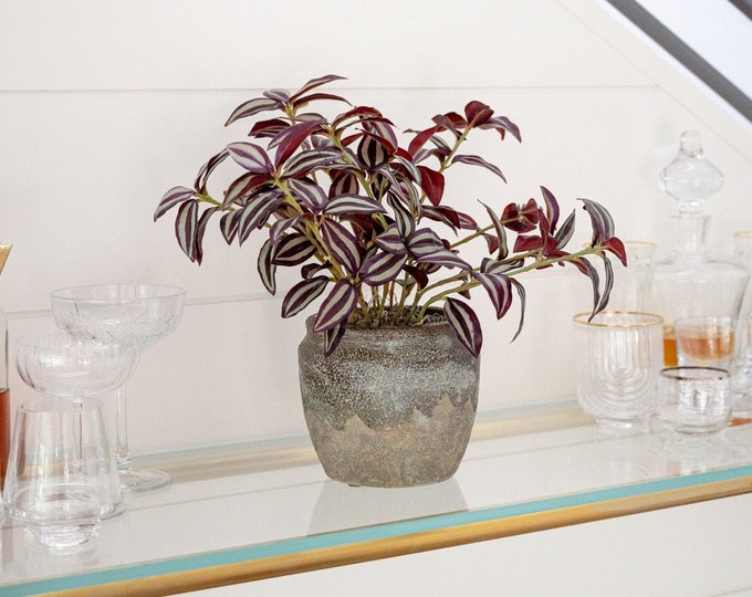 Faux Potted Burgundy Spiderwort / Wandering Jew Plant