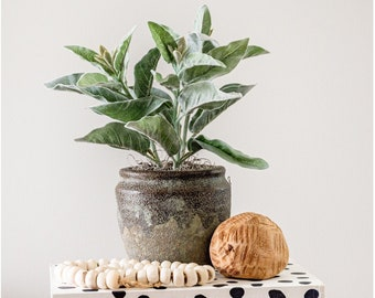 Artificial, Faux Potted Lamb's Ear Plant in an Earthy Ceramic or Textured White Pot