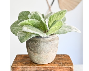 Artificial, Faux Potted Lamb's Ear Plant in an Earthy Ceramic Planter
