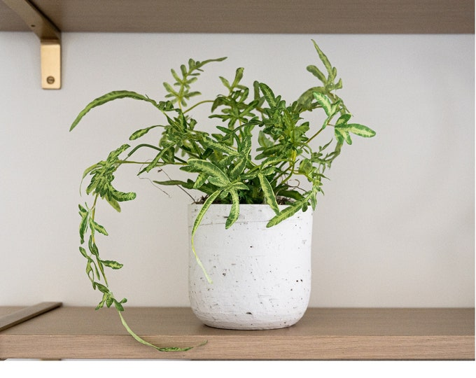 Faux Potted Lacy Fern Plant