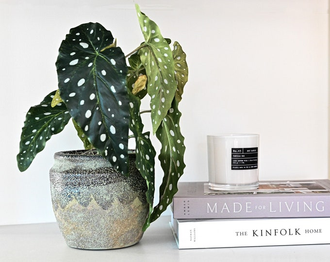 Faux Spotted Begonia Plant