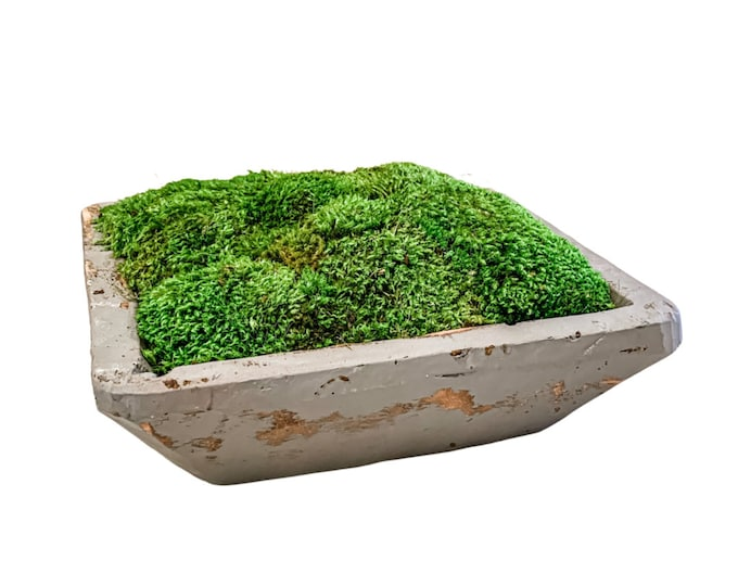 Decorative Preserved Moss in a Light Gray Square Hand Carved Spanish Oak Wood Bowl