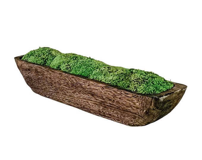 Decorative Preserved Moss in a Hand Carved and Blackened Paulownia Wood Trough