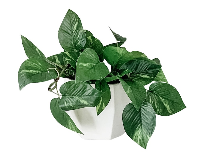 Faux Pothos Plant with Optional Plant Hanger