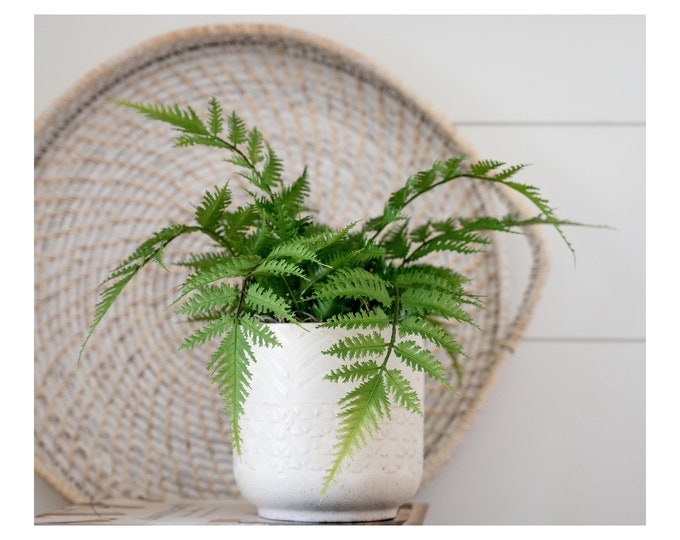 Faux Potted Light and Airy Fern