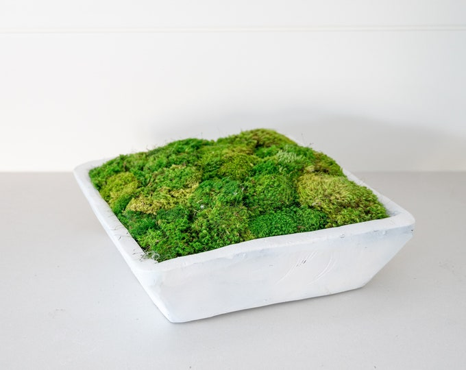Decorative Preserved Moss in a Matte White Square Hand Carved Spanish Oak Wood Bowl