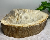 Petrified wood bowl or dish - Home decor and unique display piece