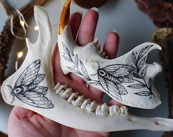Hand painted beaver jaw