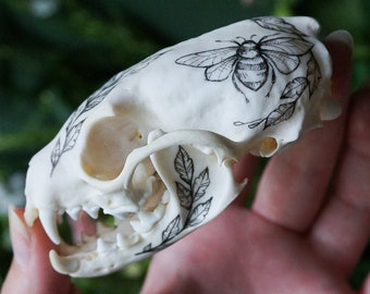 Hand painted skull of marten