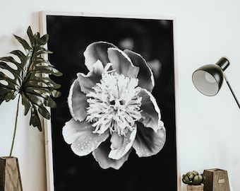Black and white Peony flower in full bloom - Flower Art, Printable Wall Art, Digital Download, Nature Photography, Abstract Print