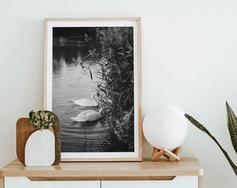 Pretty Shy Swans swimming - Modern, Printable Wall Art, Digital Download, Nature Photography, Abstract Print