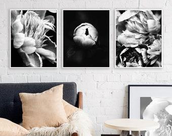 Set of 3 pretty Peony flowers, rain drops - Macro art, Modern Minimalist, Printable Wall Art, Digital Download, Nature Photography