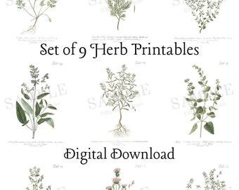 Herb Prints Set of 9 | Digital Download | Vintage Plant Printables | Encyclopedia Drawings | Gallery Wall | Entryway Living Room Wall Art
