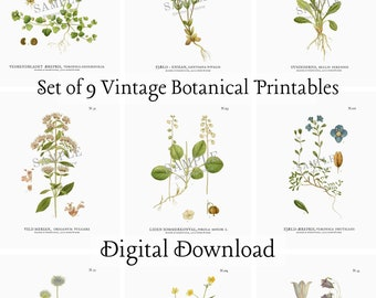 Vintage Botanicals, Set of 9 | Gallery Wall Art Prints | Encyclopedia Illustrations | Living Room Wall Decor | Entryway Wall | Flower Prints
