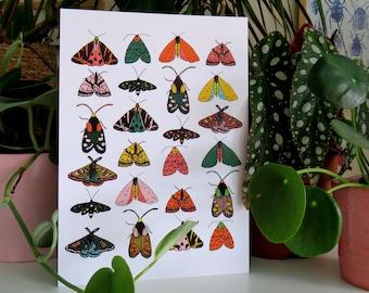 Mixed Moth Print / art print / insect print / multicoloured moths