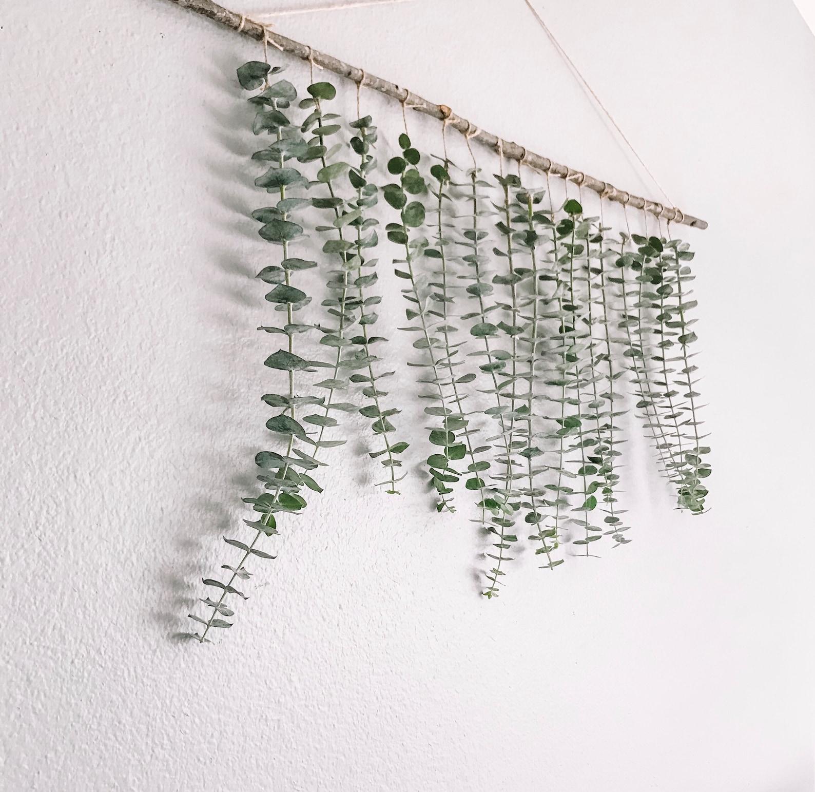 Eucalyptus Wall Hang