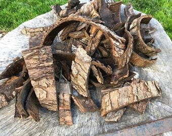 Tree bark- Maple