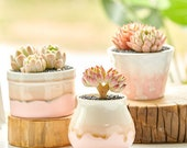 Succulent ceramic planter-cactus succulent plant pot-Cute planter-Flower Pot Gift-Garden Desk Decoration