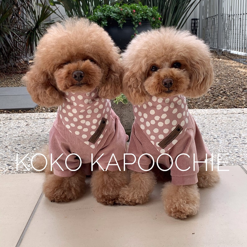 Two dogs wearing pink hoodies