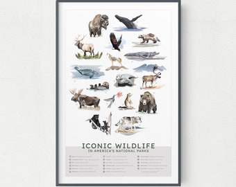 Iconic Wildlife in America's National Parks