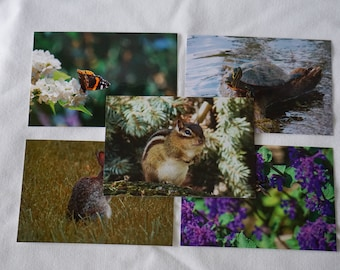 Animal Postcards Set of 10 Variety Pack Series 2 | Snail mail | Pen pals | Stationery