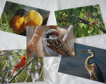 Bird Postcards Set of 10 Variety Pack | Snail mail | Pen pals | Stationery