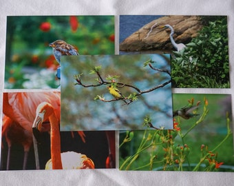 Bird Postcards Set of 10 Variety Pack Series 2 | Snail mail | Pen pals | Stationery