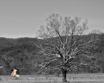 Lone Tree Print | Lone Tree Photo | Black and White Print | Black and White Photo