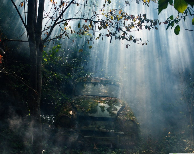 Featured listing image: LIMITED EDITION Photo of an old Simca Aronde car lost in the woods, aluminum Dibond
