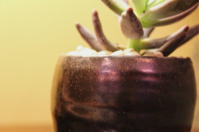 Blue Chalksticks Succulent in Iridescent Pot