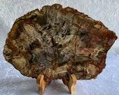 Gorgeous Large Petrified Wood Stone Slab