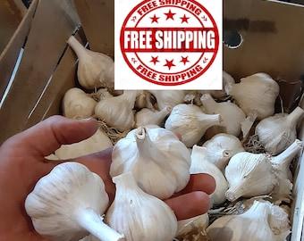 Hardneck German Garlic! Chemical free.