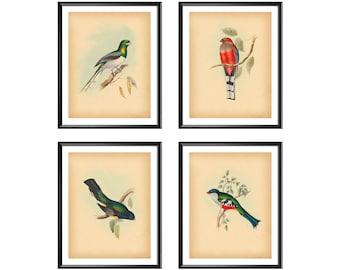 Beautiful Peacock Exotic Animal Bird Art Flowers Fruit Painting Canvas Print A3