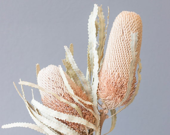 protea, natural, dried flowers, dried flower waistband, bouquet, bouquet, dried flowers, natural