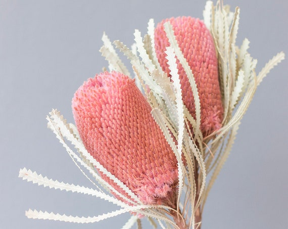 Protea, old pink, dried flowers, dried flower waistband, bouquet, bouquet, dried flowers, old pink
