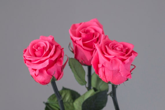 Infinity Rose Pink, Valentine's Rose, Real Rose Stabilized, Dry Flowers, Rose, Valentine, Gift Valentine, Flower Window