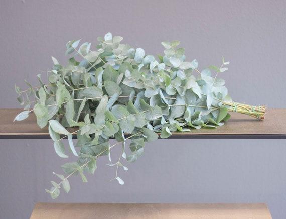 Eucalyptus Pur, Fresh Eucalyptus, Grey-Green, Flower Window, Spring, Vintage, Boho, Fresh Green, Cinnerea Eucalyptus