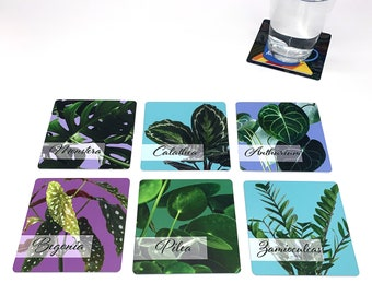 Plant Drink Coasters - House Plants Set of 6