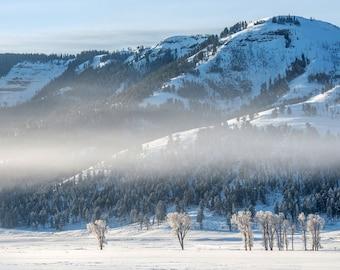 Frosted Tree Landscape, Winter Landscape Photography, Nature Photo Print, Nature Wall Art, Lauren Pretorius Photography | 29