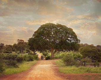 African Safari Road with Tree, Landscape Photography, Nature Photo Print, Nature Wall Art, Lauren Pretorius Photography | 56