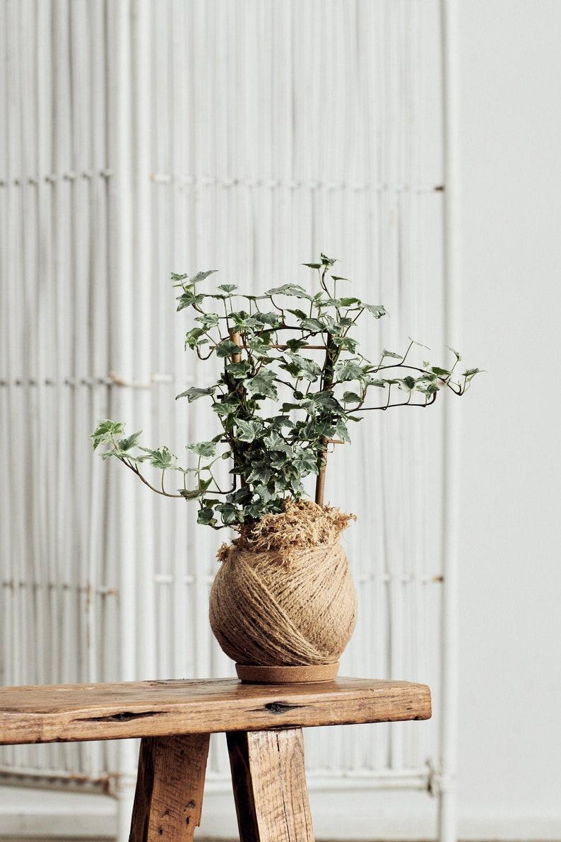 Kokédama Moss Ball with Variegated Ivy Easy Care Boho Style image 0