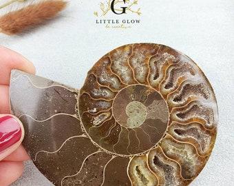 1/2 Ammonite, sawn and polished, Madagascar