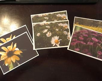 still life photography cards Daisy, Sunflowers