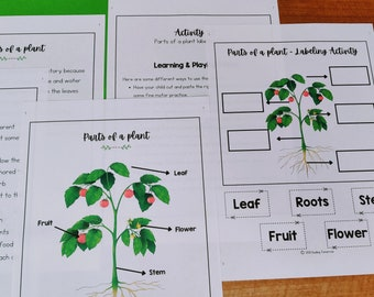 Parts of a plant Printable Mini Unit, Kindergarten Science Curriculum, Preschool Science, Plants Unit Study Homeschool Learning, Nature Unit