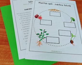 Plant Life Cycle Printable Worksheet, Kindergarten Science Curriculum, Preschool Science, Plants Unit Study Homeschool Learning, Nature Unit