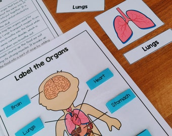 Human Body Organs Printable Worksheets, Human Body Busy Book, Human Body Printable Organ, Human Organs Diagram & Flashcards, Learning Binder