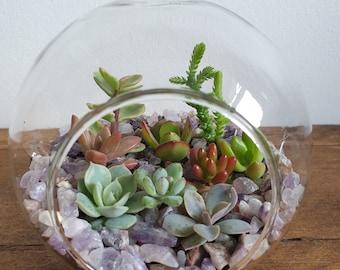 Succulent Plant Glass Terrarium Kit