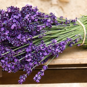 "Shalfey Rare Organic Herb Wild Sage Seeds /""Lekarstvennaya/"" Salvia Officinalis"
