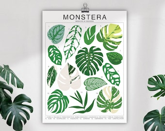 Monstera Plant Species Unframed Poster   Houseplant Artwork Wall Decor   Tropical Plant Identification   Plant Leaf ID Chart